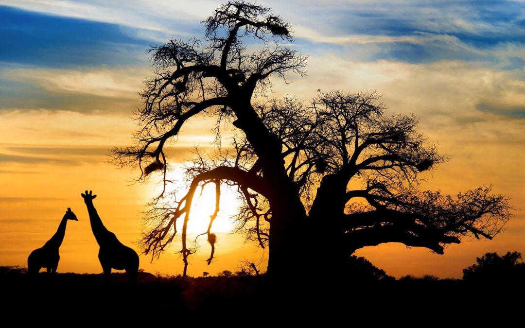 Rondreis Afrika
