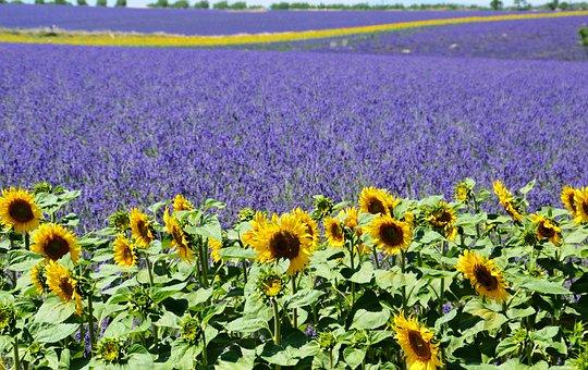 Kamperen in Frankrijk